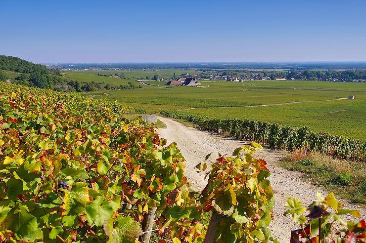 La Bourgogne et le Jura, terre bénie de Bacchus
