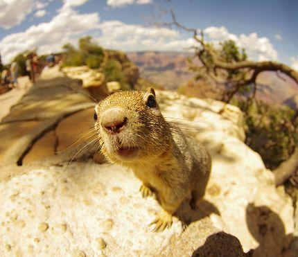 Squirrel at Grand Canyon National Park