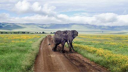 Un éléphant dans le cratère du Ngorongoro