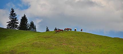 Chevaux sur la colline