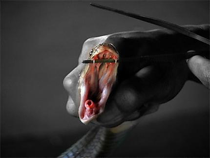 Dans la gueule d'un serpent