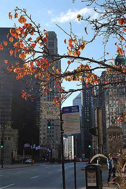 L'autonne à Chicago