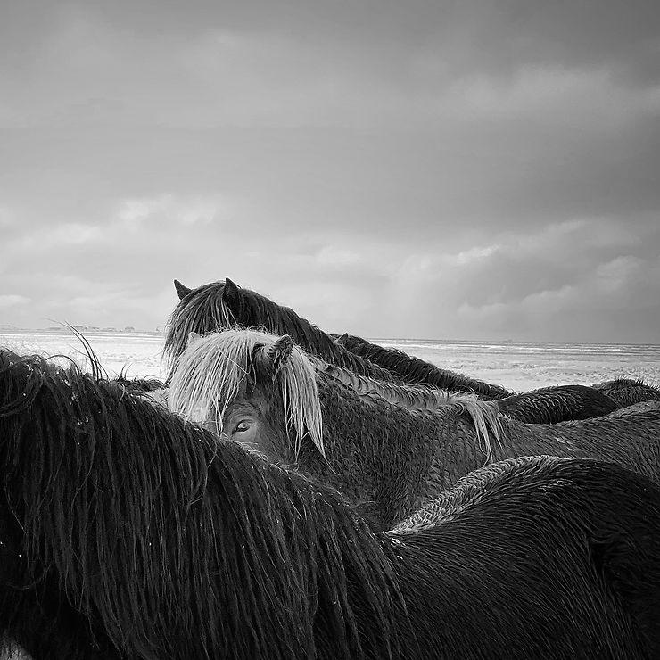 Chevaux sous l'orage, Islande