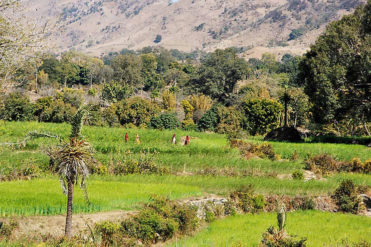 Coup de cœur : la route entre Kumbhalgarh et Ranakpur