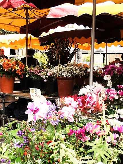 Fleurs au marché des Lices