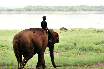 Walking with an elephant