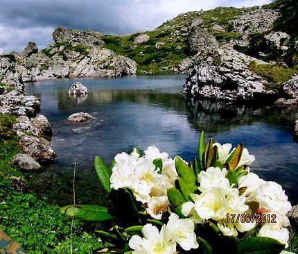 Le lac bleu et rhododendron du Caucase