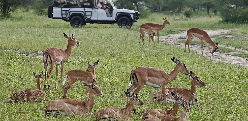 Séjour Safari à SELOUS & RUAHA dans le sud de la Tanzanie (Février 2020)