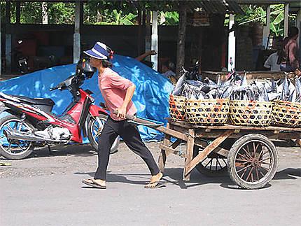 Transport de poissons