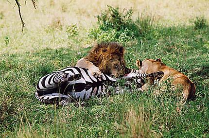 Repas des Lions