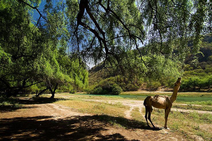 Escapade dans le Dhofar, terre de l'encens