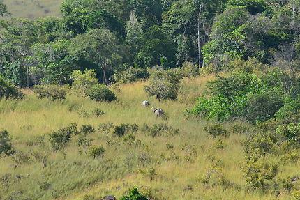 Éléphants dans le parc de la Lopé, Gabon