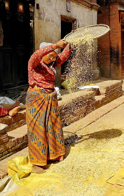 Vaneuse de riz népalaise