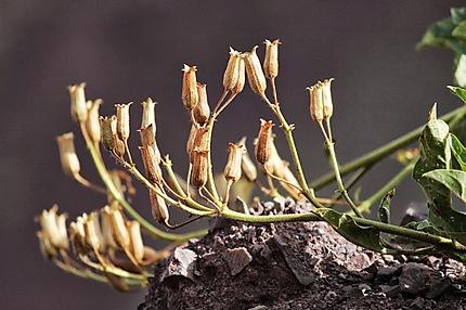 Petites plantes sèches