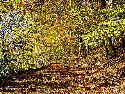 Couleurs d'automne à Halden