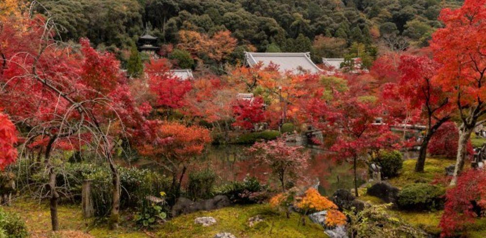Compte-rendu de 3 semaines au Japon en automne (novembre 2019)