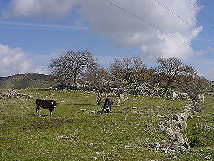 Paysage sur la route de Sortino à Ferla