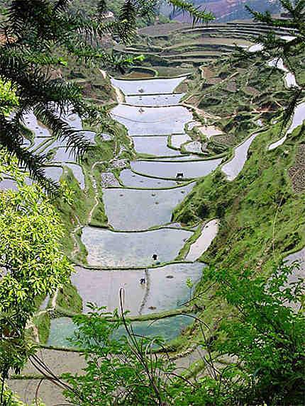 Cultures dans les montagnes du pays Miao