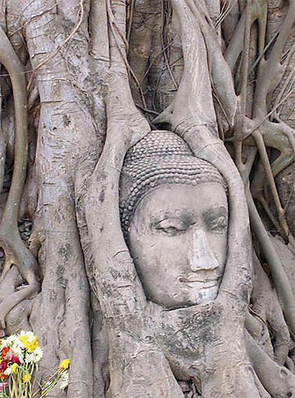 Visage de Bouddha dans un arbre