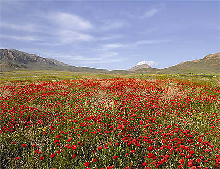 Paysage d'Arménie