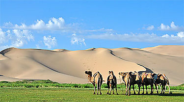 Dunes de Khongor (Khongoryn Els ; désert de Gobi)