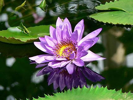 Waterlily House à Kew