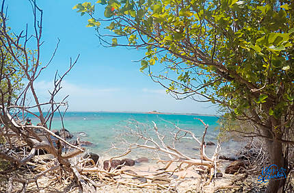 La plage sauvage Trincoamalee