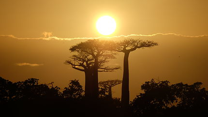 Allée des baobabs soleil levant