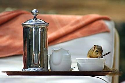 Un petit thé?