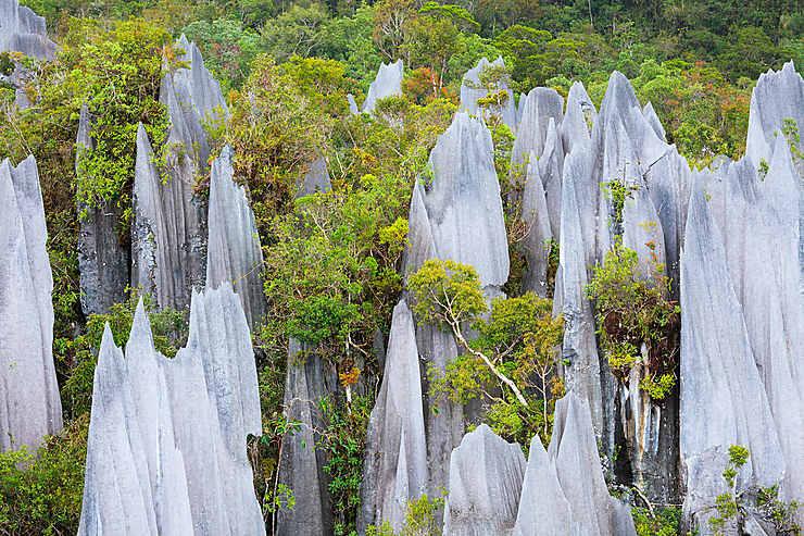 Parc national du Gunung Mulu (Sarawak, Bornéo)