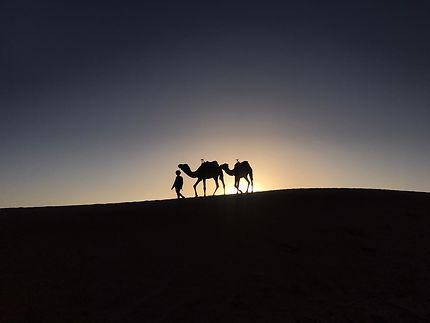 Bedoin et dromadaires