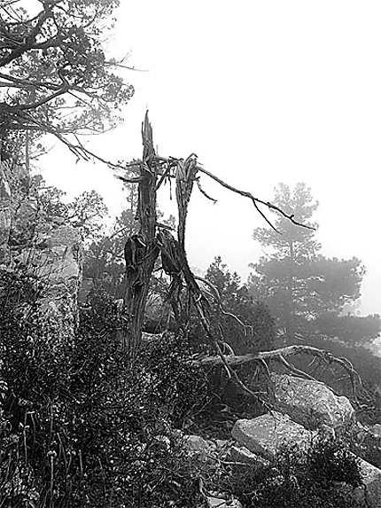 Paysages lugubre de la nécropole de Termessos