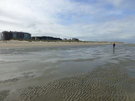 Marée basse et dunes