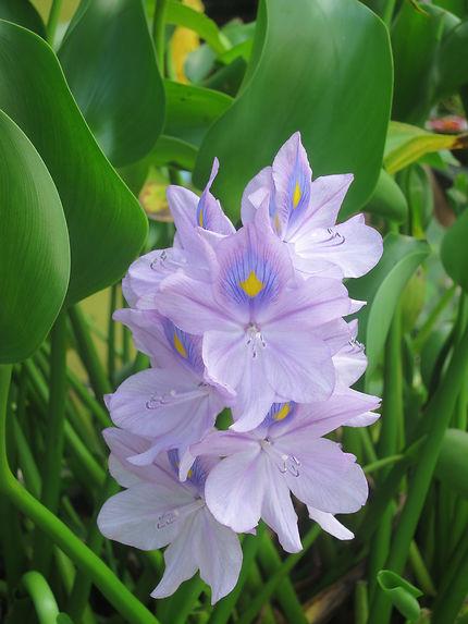 Fleurs à Ubud