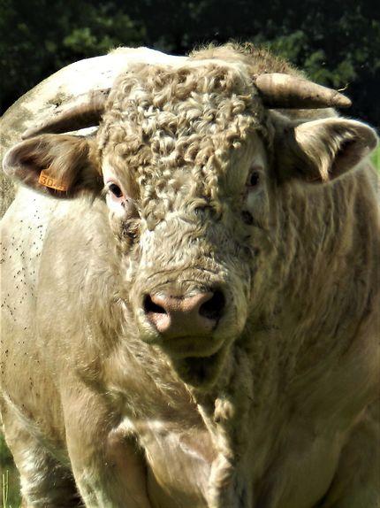 Sous le signe du taureau, dans la Creuse