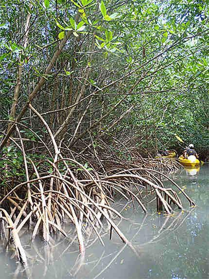 Kayak en famille dans la mangrove