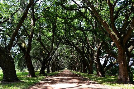 Greenwood Plantation
