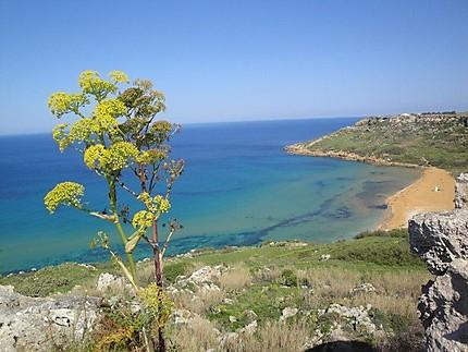 Ramla Bay - Gozo
