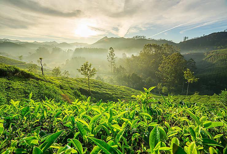 Munnar, la vallée des thés
