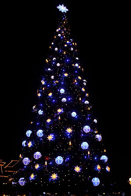 Le sapin by night