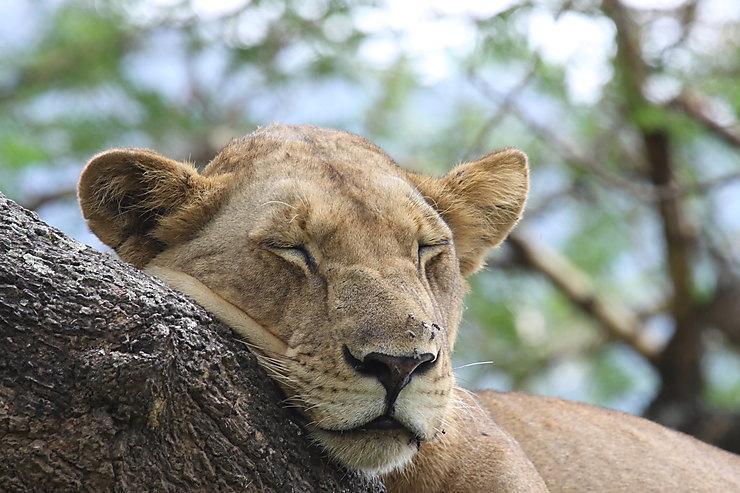Parc national du lac Manyara, Tanzanie