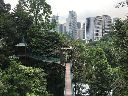 Promenade Sur La Canopee Ponts Kuala Lumpur Malaisie Routard Com