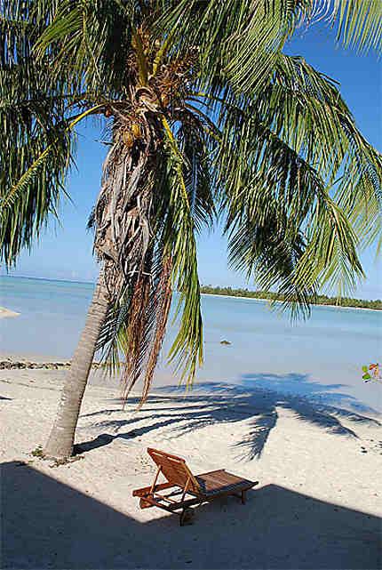 Palmes