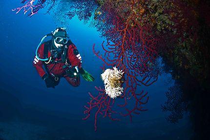 Découverte de la plongée au large de Cythère