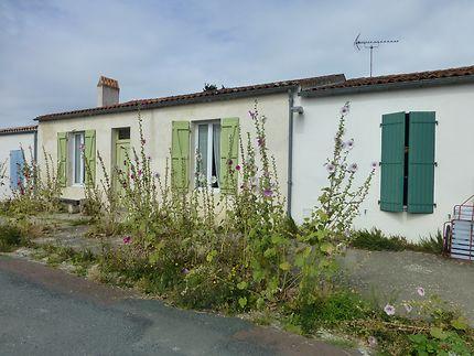 Roses trémières sur l'Île d'Aix