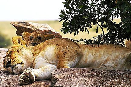 Lionne au repos avec son petit