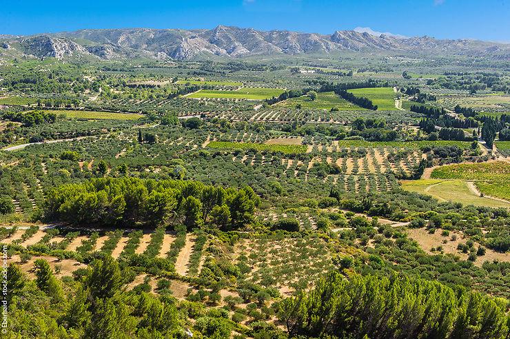 Gastronomie - La vallée des Baux-de-Provence, sur les chemins de l'huile d'olive