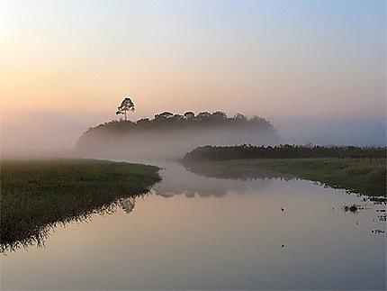 Le marais de kaw au petit matin