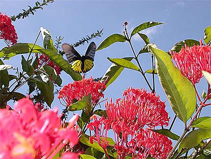 Bruissement d'aile de papillon