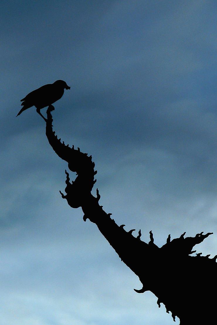L'oiseau sur le temple